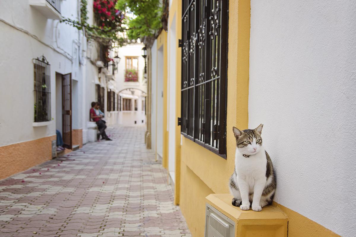 Marbella kot