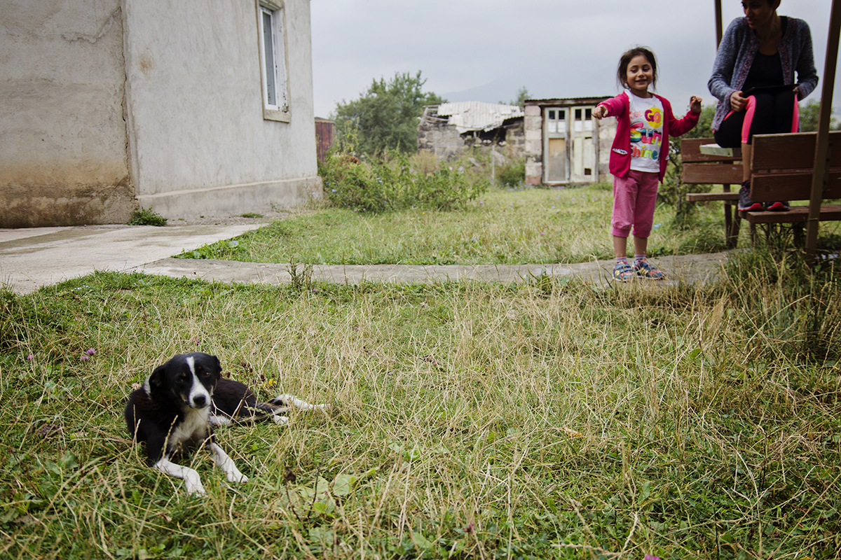 bezdomne psy w Armenii