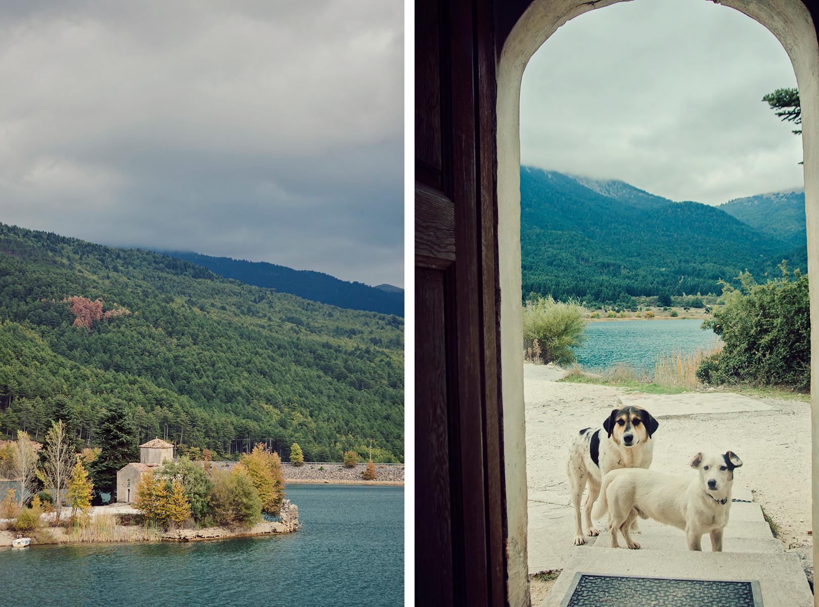 bezpanskie psy w Grecji