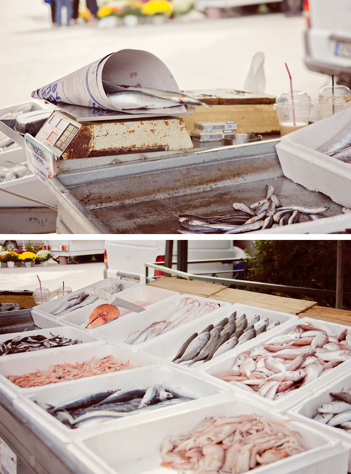 swieze ryby z grecji