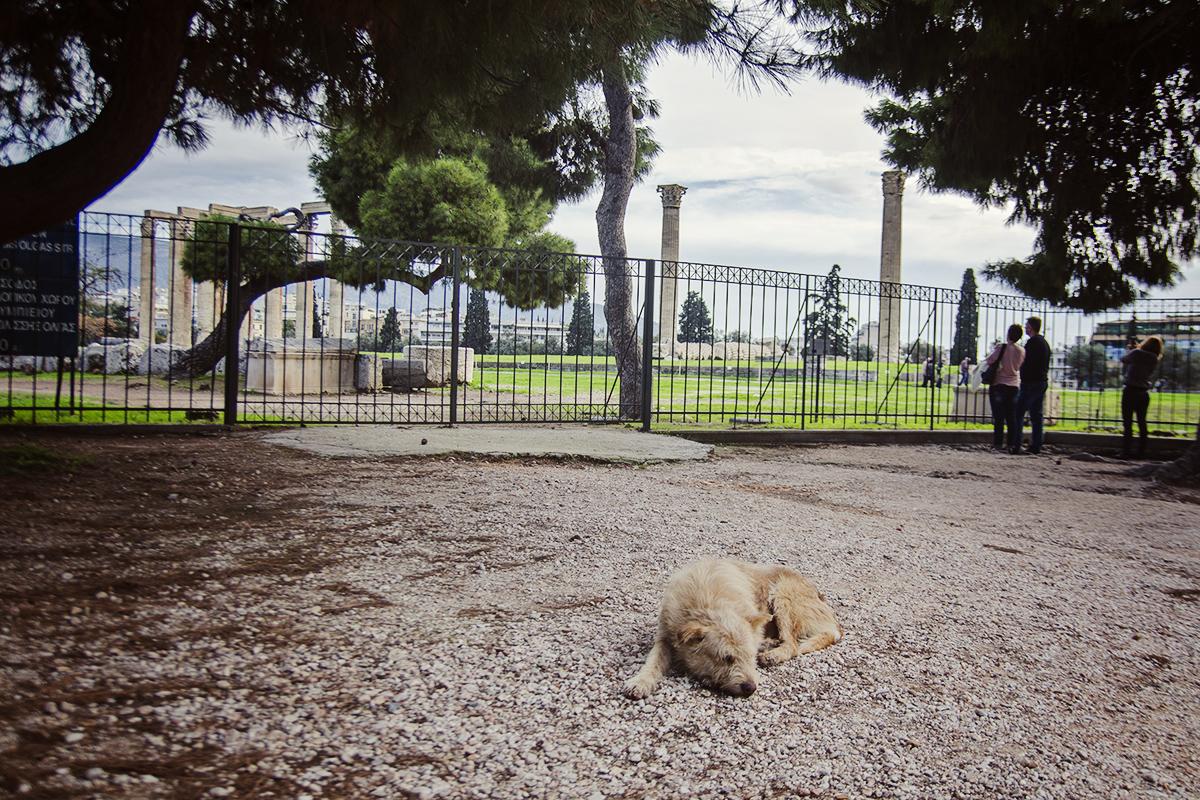 bezpański pies w Atenach