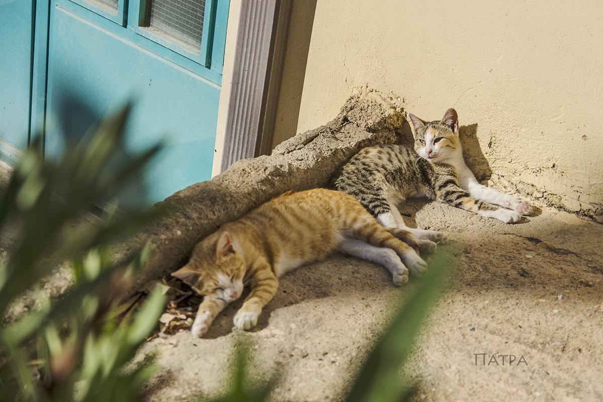 koty w sloncu w patrze
