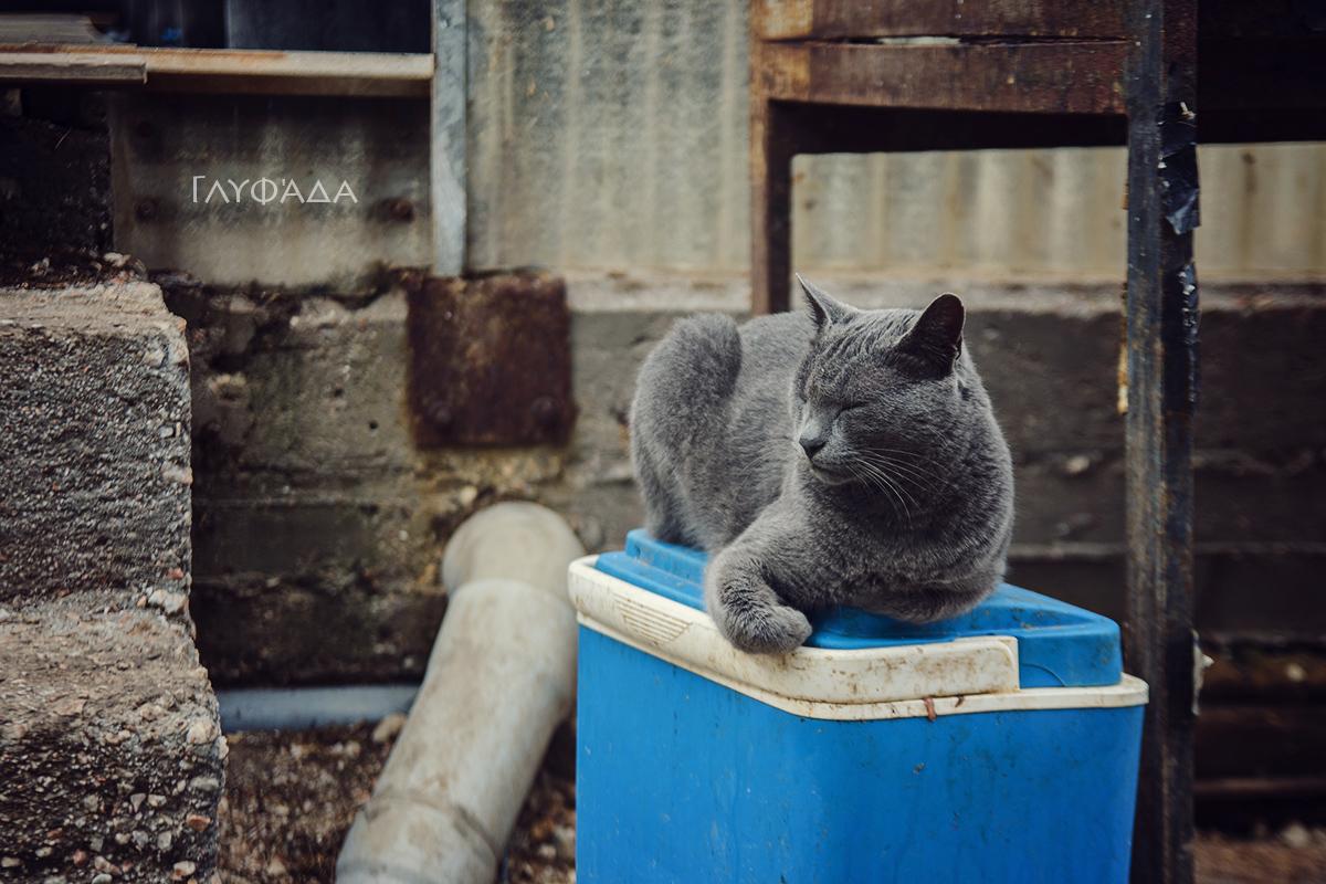 Glyfada cat