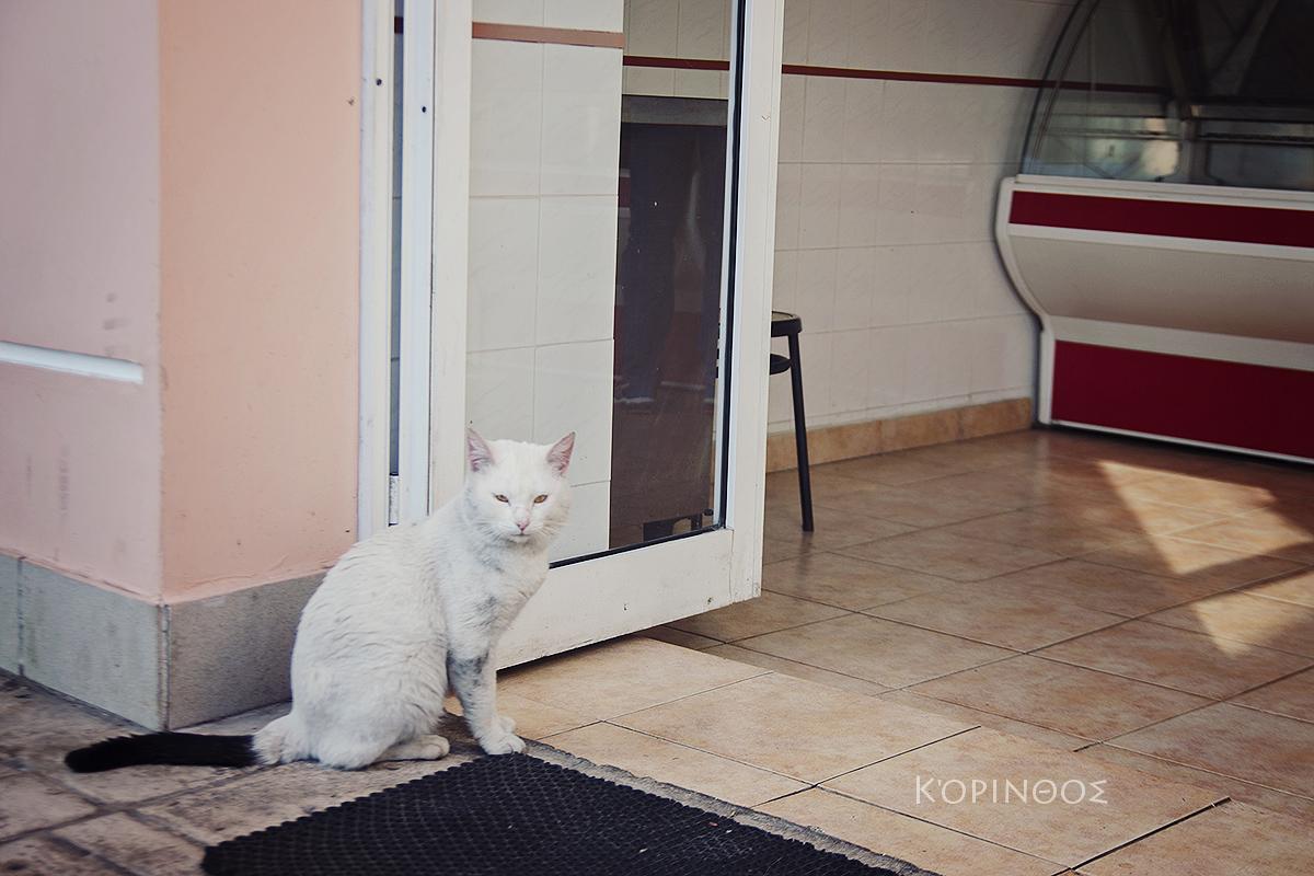 kot przy miesnym