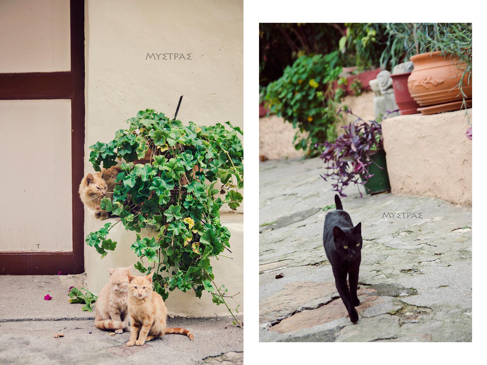 koty w Mistrze
