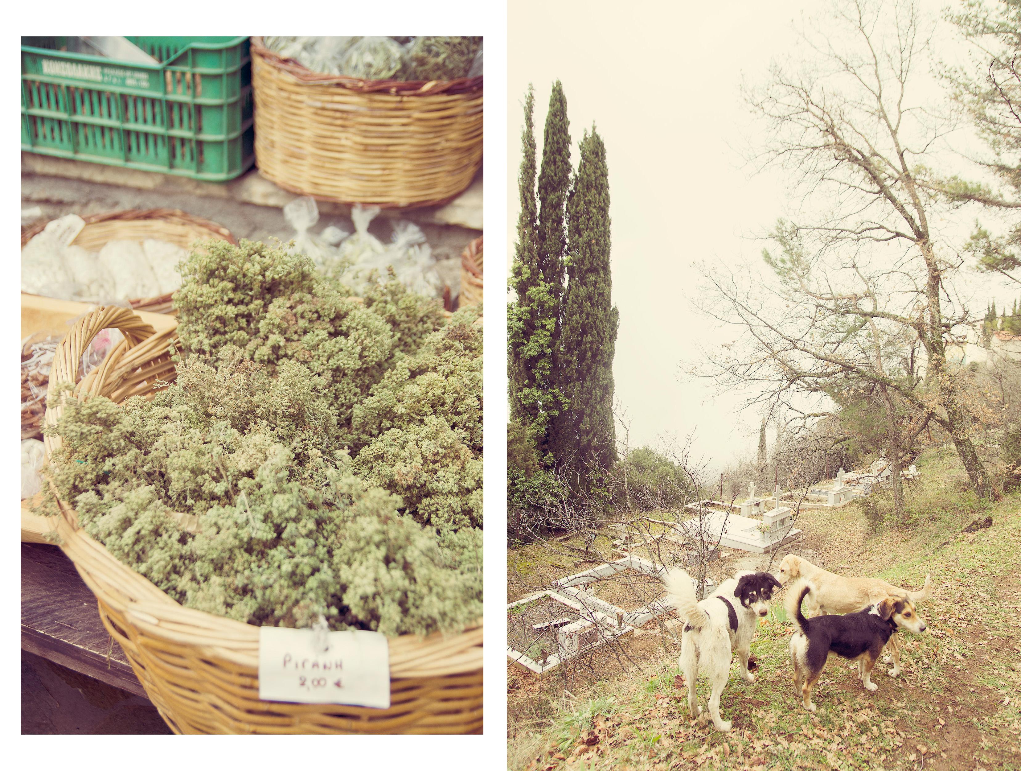 psy i ziele