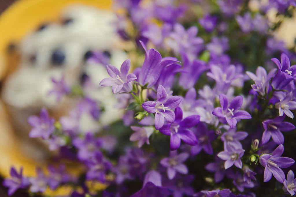 flowers_morning